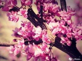 Азбука ингредиентов: эфирное масло розового дерева